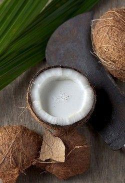 Корисні властивості кокоса