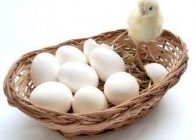 Користь і шкода яєць для бодібілдерів