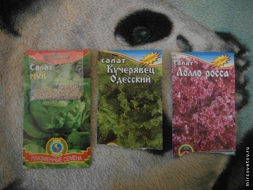 Користь листового салату