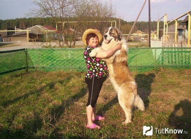 Московська сторожова собака з господинею