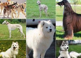 Породи мисливських собак