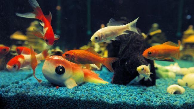 Як правильно мити акваріум