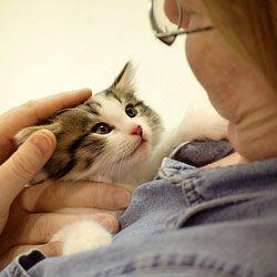 Правда про кішок: вони приносять користь