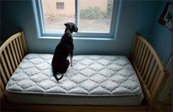 Правила утримання і вигулу собак