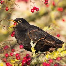 Птахи теж можуть напитися в устілку