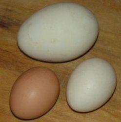 Поширені міфи про яйця