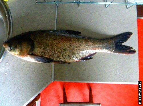 Рецепт запеченої риби