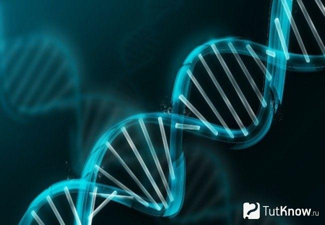 Ділянка ланцюжка ДНК
