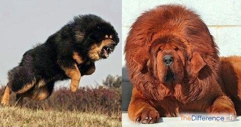 найдорожча собака в світі фото