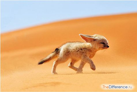 Найменша собака в світі