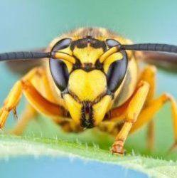 Найболючіші укусу комах