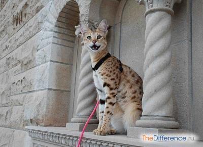 Найкрасивіші кішки
