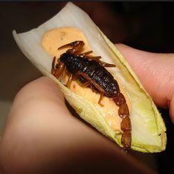 Найпопулярніші їстівні комахи