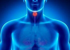 Схематичне зображення щитовидної залози