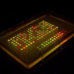 Шпигуни можуть ховати секретні повідомлення в бактеріях