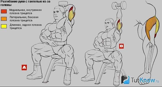 М`язи, задіяні при жимі гантелей через голову