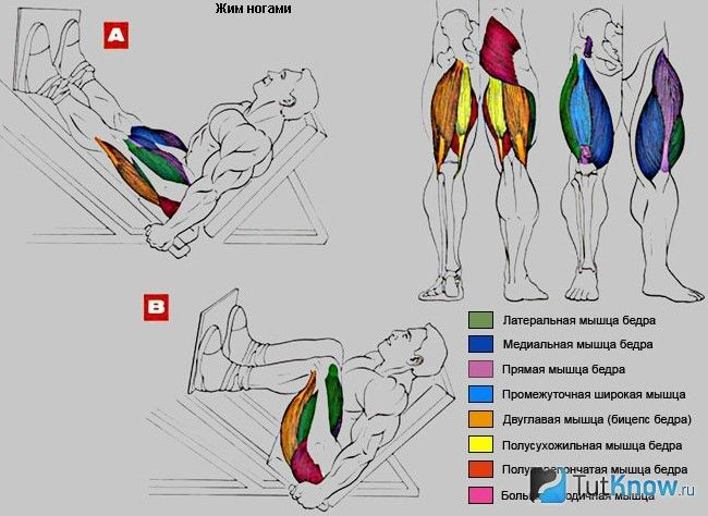 М`язи, задіяні при виконанні жиму ногами