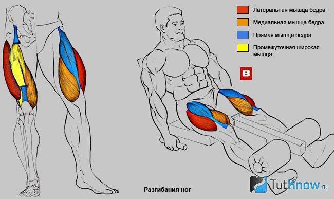 М`язи, задіяні при виконанні розгинання ніг
