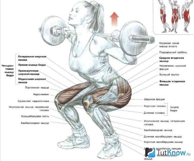 М`язи, задіяні при присіданнях