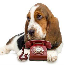 Собака врятував своє життя, зателефонувавши в службу порятунку