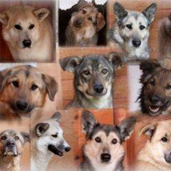 Собаки для ледачих власників