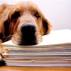 Собаки знижують рівень стресу на роботі