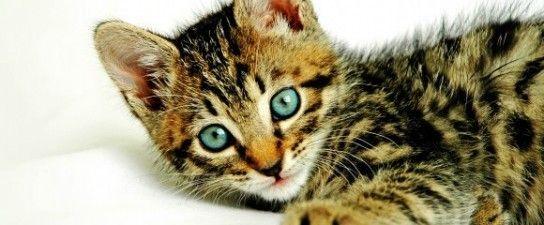 Відповідність віку кішок і людей