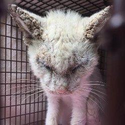 Врятована сліпа бездомна кішка здивувала своїми неймовірними очима