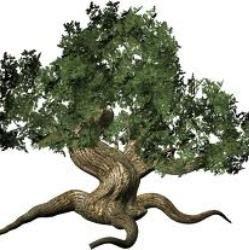 Список самих незвичайних дерев нашої планети