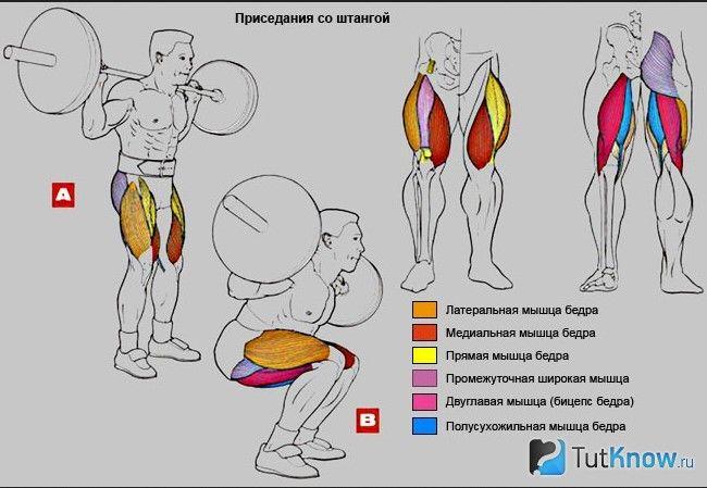 Схема виконання присідань і задіяні м`язи