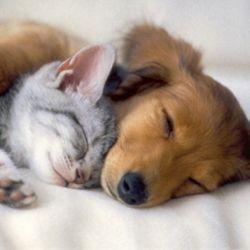 Старість - і собаці, і кішки не радість
