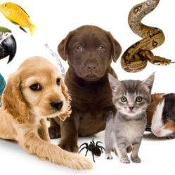 Тест: Яке домашня тварина у Вас вдома і чому?