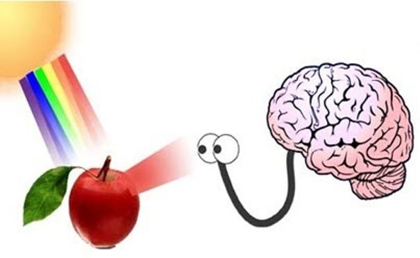 brain-colors.jpg