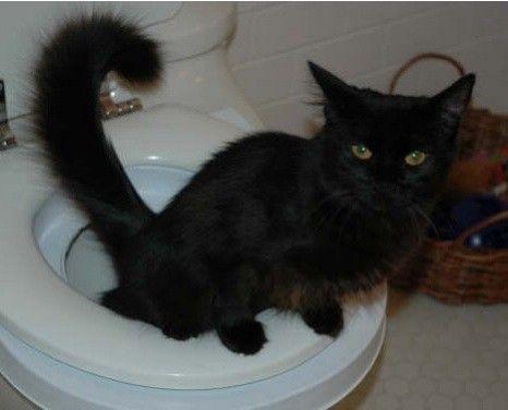 У кішки пронос. Чим лікувати?