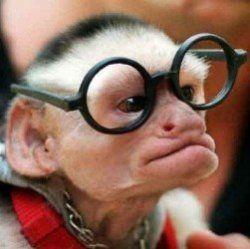 Вчені Зробити мавп розумніші за допомогою імплантату