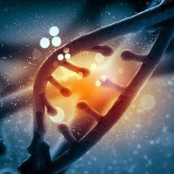 Вчені: сотні генів оживають після смерті