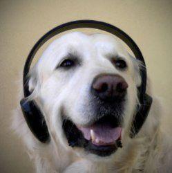 Вчені з`ясували, яку музику краще домашні тварини