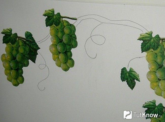 Малювання виноградної лози