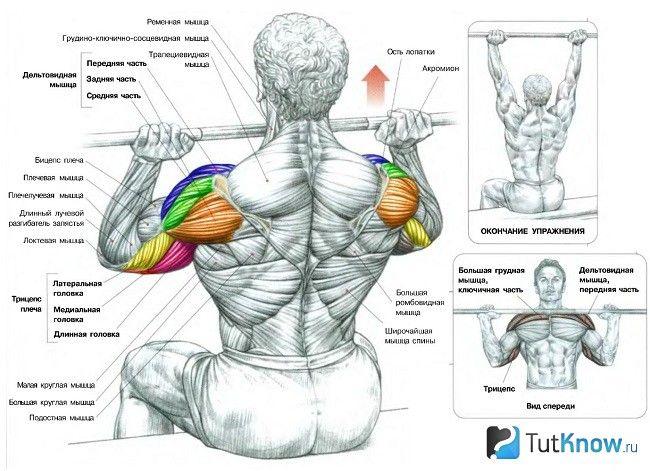 М`язи, задіяні при жимі штанги сидячи