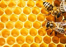 Укус бджоли: користь чи шкода?