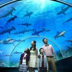 У Сінгапурі відкрився найбільший акваріум в світі