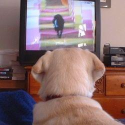 В сша запустили телевізійний канал для собак