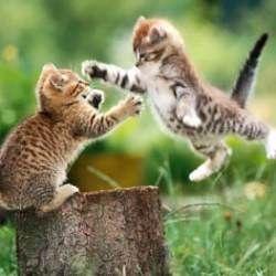 Відео з котиками корисні для здоров`я