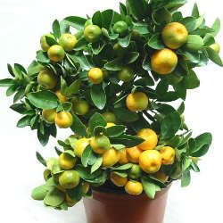 Вода з лимоном натщесерце замінить безліч ліків