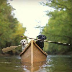Чи всі собаки вміють плавати?