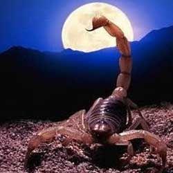 Все найцікавіше про місяць в знаках: місяць в скорпіона
