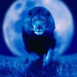 Все найцікавіше про місяць в знаках: місяць у леві