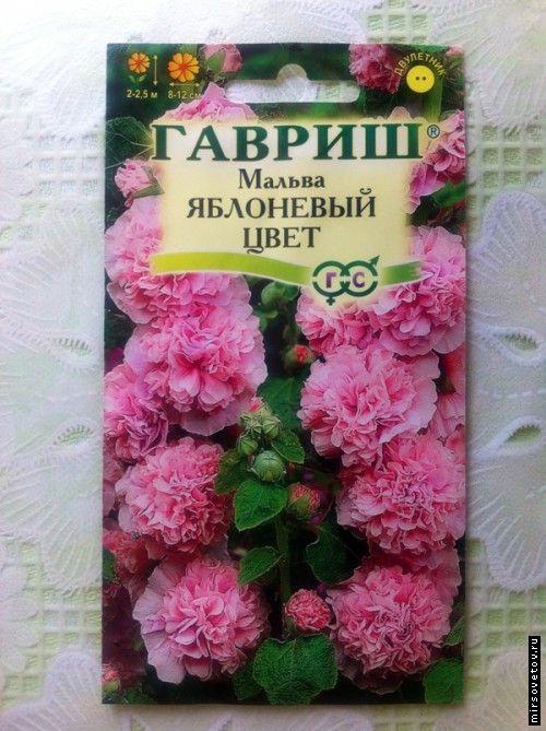 Вирощування шток троянди з насіння