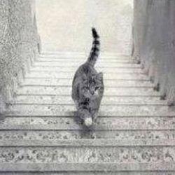 Загадка: цей кіт спускається або піднімається?