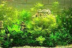 `акваріумні